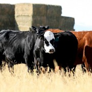 Prineville Farm and Ranch Insurance